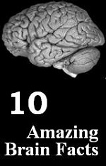 10 amazing brain facts